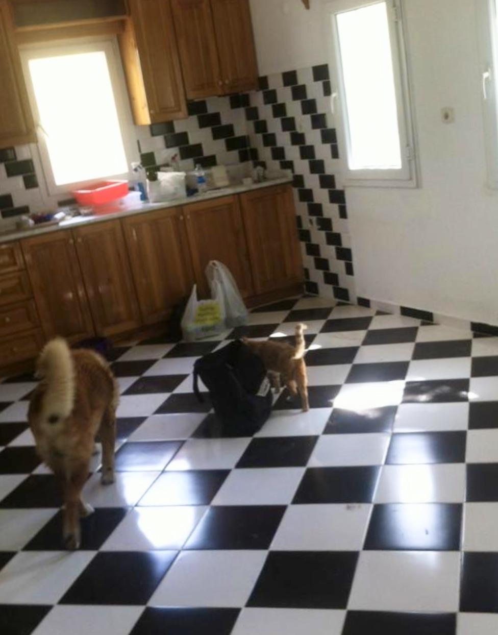 Die Wohnung ist leer geräumt und geputzt. Ein letztes Mal füttere ich Gümüş und Katzenlady Ginger.